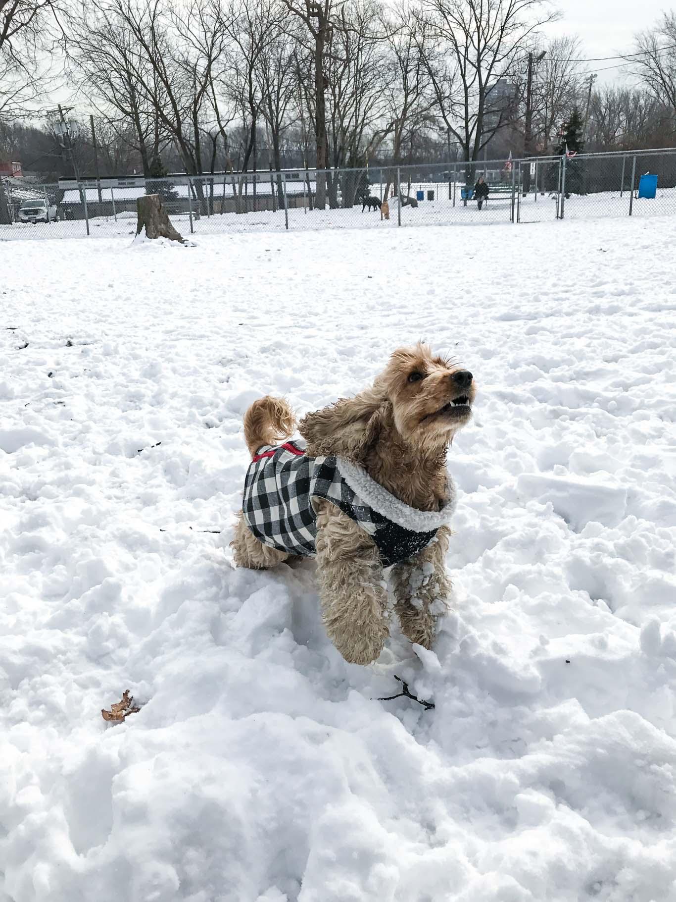 dog-playing-snow
