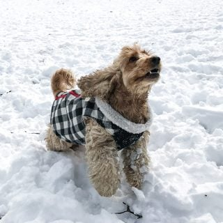 7 Things To Do With Your Dog In The Winter