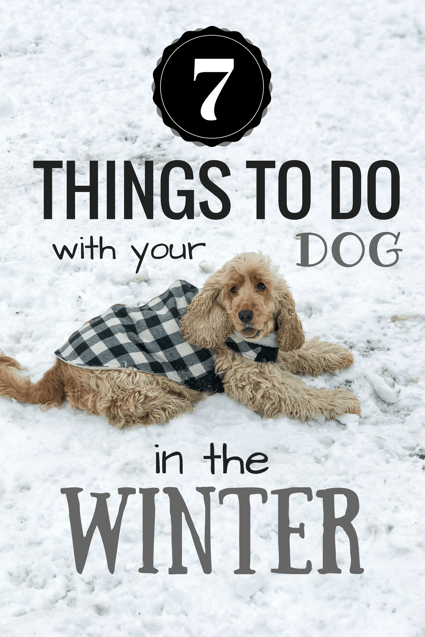 7 Things To Do With Your Dog In The Winter | www.oliviascuisine.com